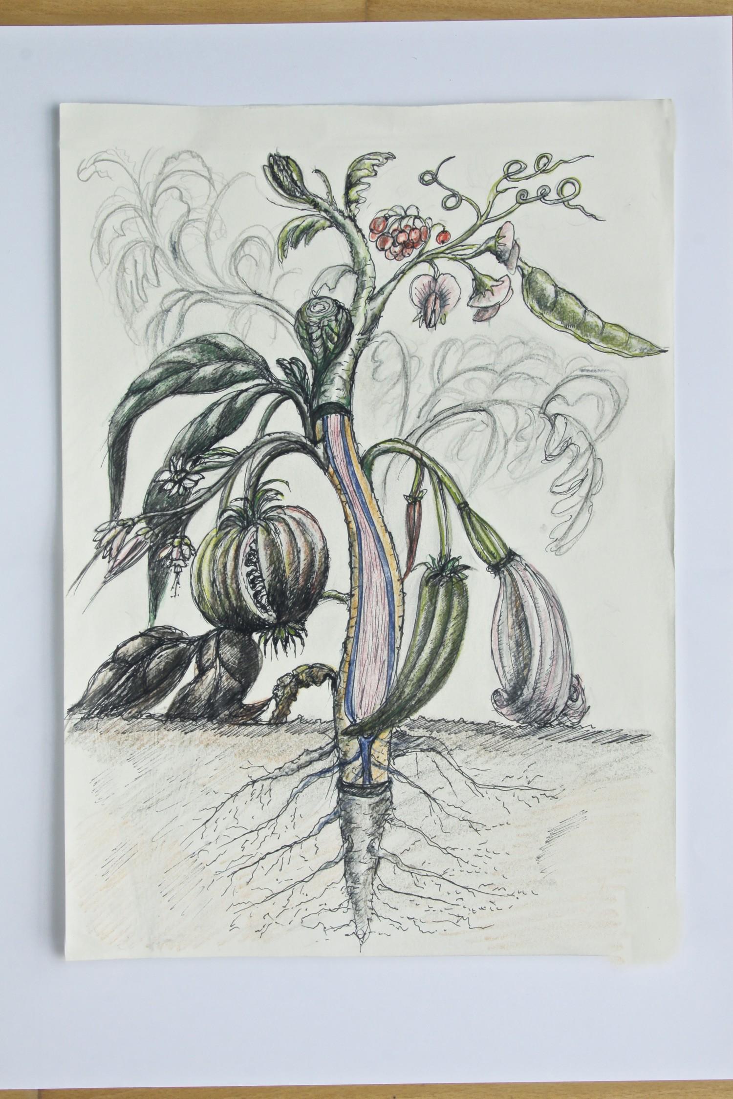 Pflanze_3349