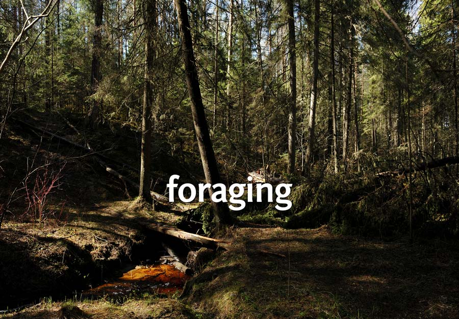 Foraging