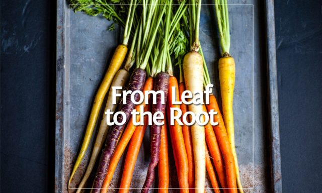 From Leaf to the Root